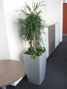 plant12